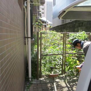 会社の寮の草刈、植木徹去