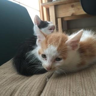 7月29日生まれの子猫です。再募集