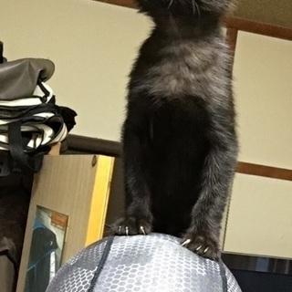 里親お願いします。 - 猫