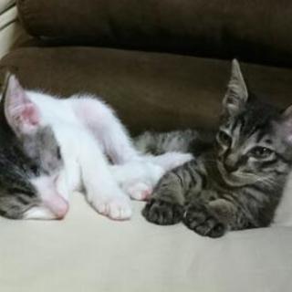 生後約4ヶ月の仔猫ちゃん 里親様再募集します。