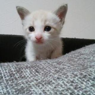 耳、しっぽに母猫のような模様