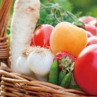 美味しい野菜のランチ付き♪「育て方・選び方・食べ方」まるごとお伝え...