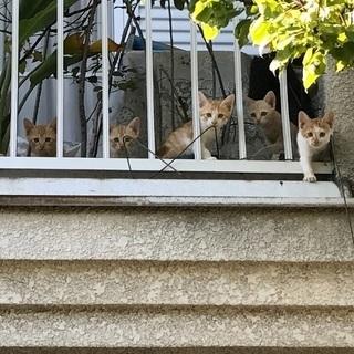 可愛こ赤猫5兄弟!男祭り!!