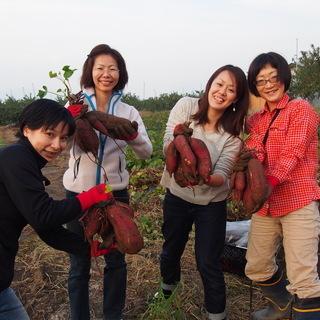秋の収穫!お芋堀り体験会!