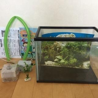小型水槽、一式セット 金魚・小魚・熱帯魚などに