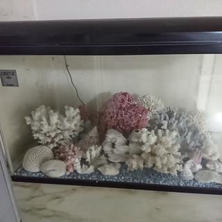 水槽の飾り珊瑚