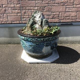 陶器鉢①(土、石、少しスミレが生えています)