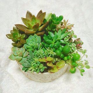 【20日締切!】多肉植物寄せ植え会☆