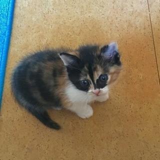 子猫 里親さん決まりました!ありがとうごさいました。