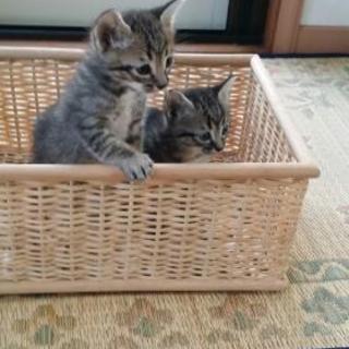 子猫の里親さん募集です。