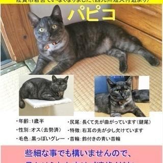 【猫を探してます】佐賀市若宮でいなくなりました