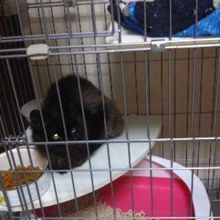 推定1歳の迷い猫保護しました♂(病院行って来ました)