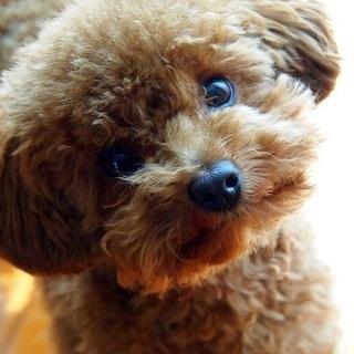 ★ふれあいハロウィン★親子で楽しむワークショップ【犬ともプロジェクト】