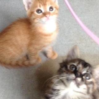 【子猫】可愛がってくれる里親さん募集