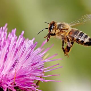 ミツバチ保護活動用に里山の土地をお持ちの方貸してください草刈りします。