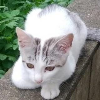 緊急(寒くなる前に)外猫ですが里親になって下さい