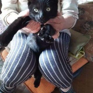 黒ちび猫(♂)の里親募集です