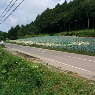 菅平高原、サーバー基地局、貸し倉庫業、真夏の平均気温19.6℃