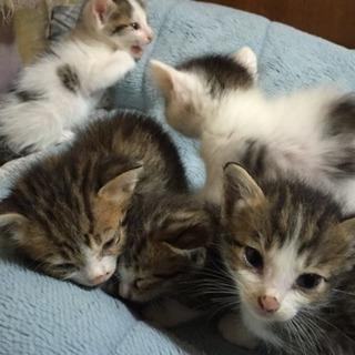 生後1ヶ月の子猫5匹