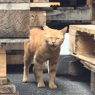 野良猫のお母さん