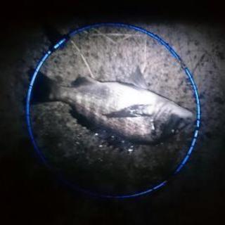 福井方面メインでフカセ釣り