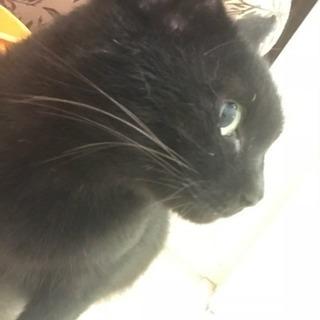 急募黒猫ちゃん