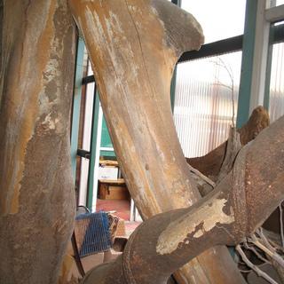 古木のオブジェ 2