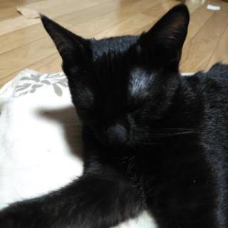 里親募集中 生後2ヶ月の元気な子猫です。