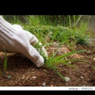 草むしりお手伝いお願いします