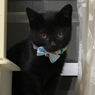 かわいい黒猫の子猫 2カ月 ➕ 2匹