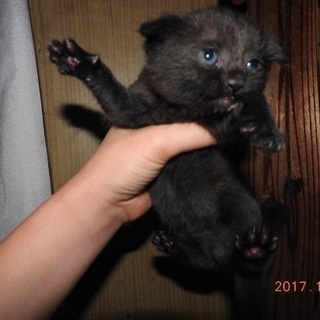1ヶ月の子猫