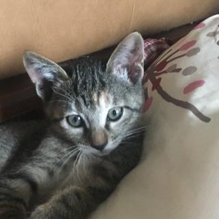 健康で元気な子猫2ヶ月 里親募集です。