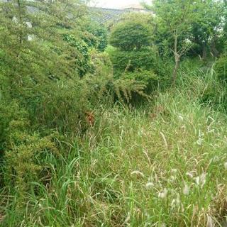 ■■■福岡市東区・お庭の草むしり、草抜き、草とり、【福岡グリーン...