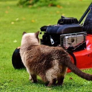 ■■福岡市東区の芝刈り・お庭の芝生のお手入れ致します。【福岡グリー...