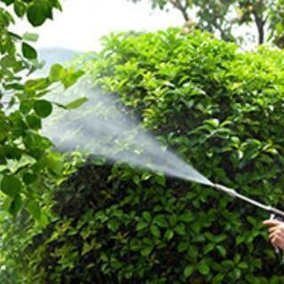 ■■福岡市東区 庭木・植木の害虫消毒剤散布【福岡グリーン 東営業所】