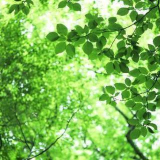 ■■福岡市博多区の庭木の剪定・植木の剪定・庭木のお手入れ【福岡グ...