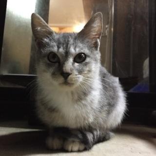 迷い猫 生後2〜3ヶ月の雌子猫