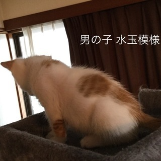 生後1カ月から1か月半★子猫の男の子兄弟 - 富山市