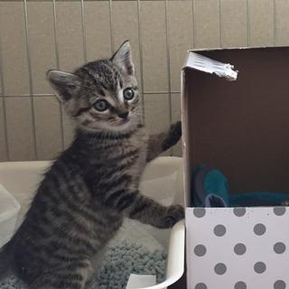 8月生まれの仔猫の里親さん募集中