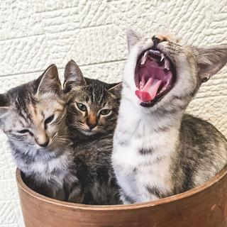 子猫5ヶ月 里親募集