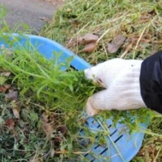 ■福岡市西区 お庭の草むしり・草ぬき・草とり【福岡グリーン 西営...