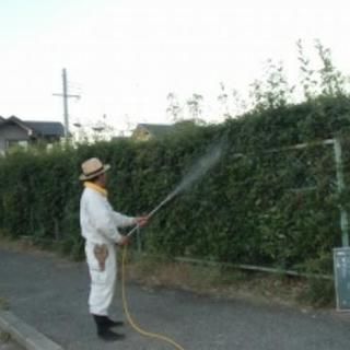 ■福岡市西区 生垣・植木・庭木の害虫・消毒剤散布【福岡グリーン ...