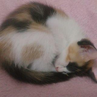 可愛い子猫デス
