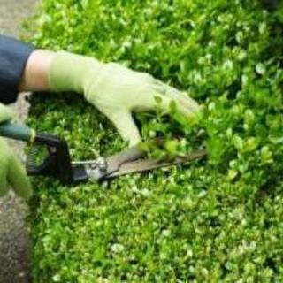 ■福岡市東区 植木の剪定・庭木の剪定の事ならプロの造園屋にお任せ...