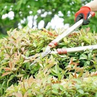 ■■宗像市【信頼】植木の剪定・庭木の刈り込み【福岡グリーン 宗像...
