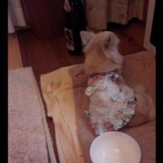 犬様のお茶会〜犬好き集まろう