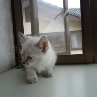 我が家で生まれた子猫です