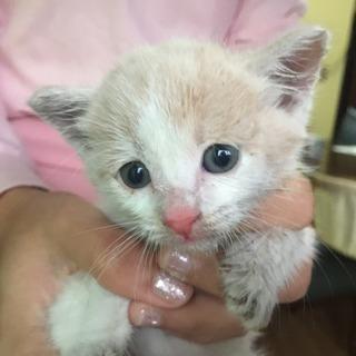 子猫の里親さん決まりました。ありがとうございました。
