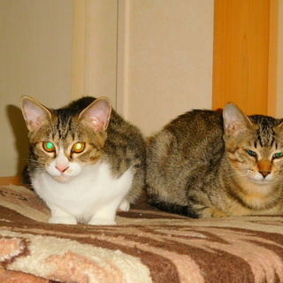 子猫の里親を募集します。4匹の子猫を保護し人に慣れてきたので里親を探しています.3匹は決まりました。 - 猫