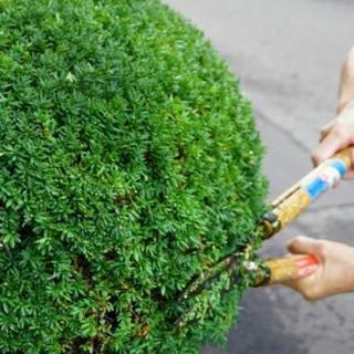 ■福岡県大野城市 【最高の技術】お庭の植木の刈り込み・植木の剪定...